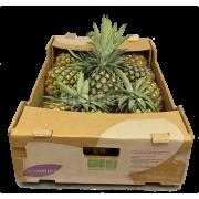 Ananas - Kostarika (bedna 9 ks)