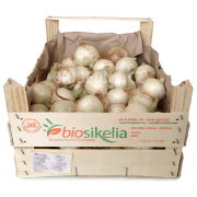 Cibule bílá - Itálie (bedna 6 kg)