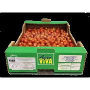 Rajčata Datterino - Itálie (bedna 3 kg)