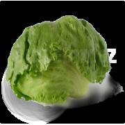 Salát ledový - Španělsko (bedna 10 kusů)