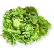 Salát Batavia zelený - Itálie (bedna 12 kusů)