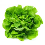 Salát hlávkový zelený - Itálie (bedna 12 kusů)